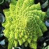 Капуста романеско - необычный овощ